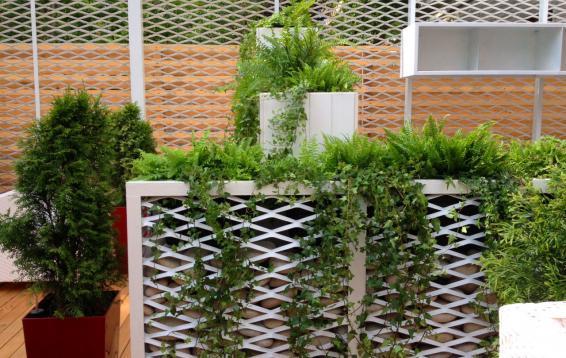 """Озеленение террасы ресторана """"Эхо"""" по проекту дизайнера Лаптева Алексеея (г.Владивосток)"""