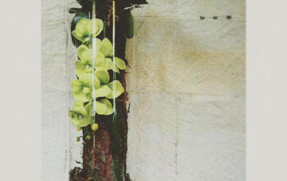 Композиция в стекле: стабилизированный мох, искусственная орхидея, кора натуральная