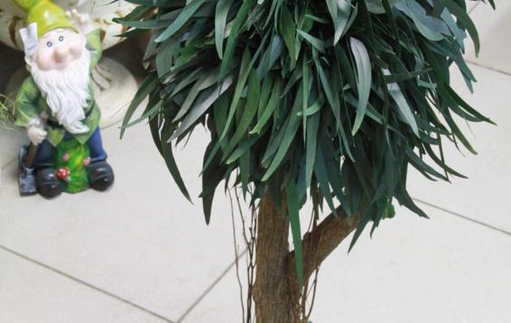 Деревце из веток эвкалипта